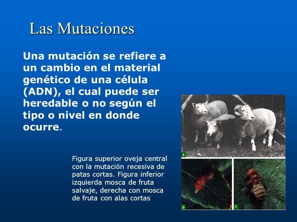 Las Mutaciones Una mutación se refiere a un cambio en el material genético de una célula (ADN), el cual puede ser heredable o no según el tipo o nivel en donde ocurre.