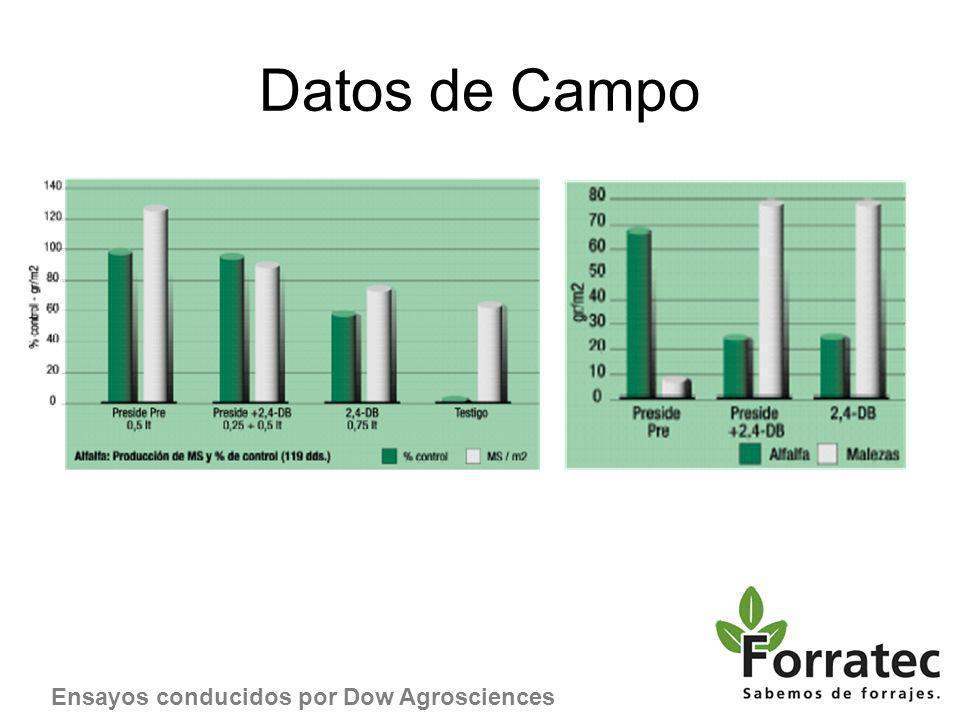 Datos de Campo Ensayos conducidos por Dow Agrosciences