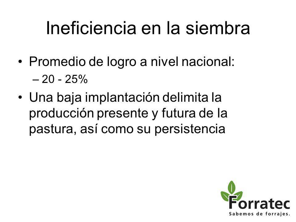 Ineficiencia en la siembra Promedio de logro a nivel nacional: –20 - 25% Una baja implantación delimita la producción presente y futura de la pastura, así como su persistencia