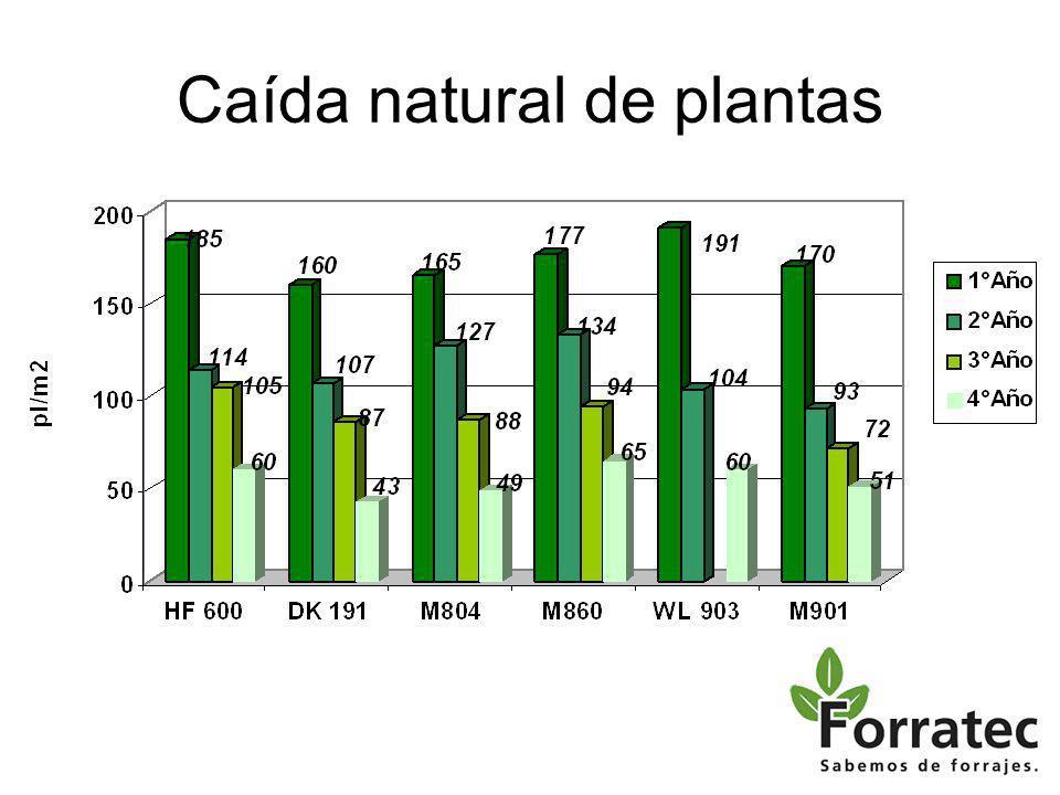 Nutrición del cultivo Análisis de suelo completo –pH, MO, P, S, CIC, Ca, K, Mg, Na,CE Corregir deficiencias en función del resultado del análisis
