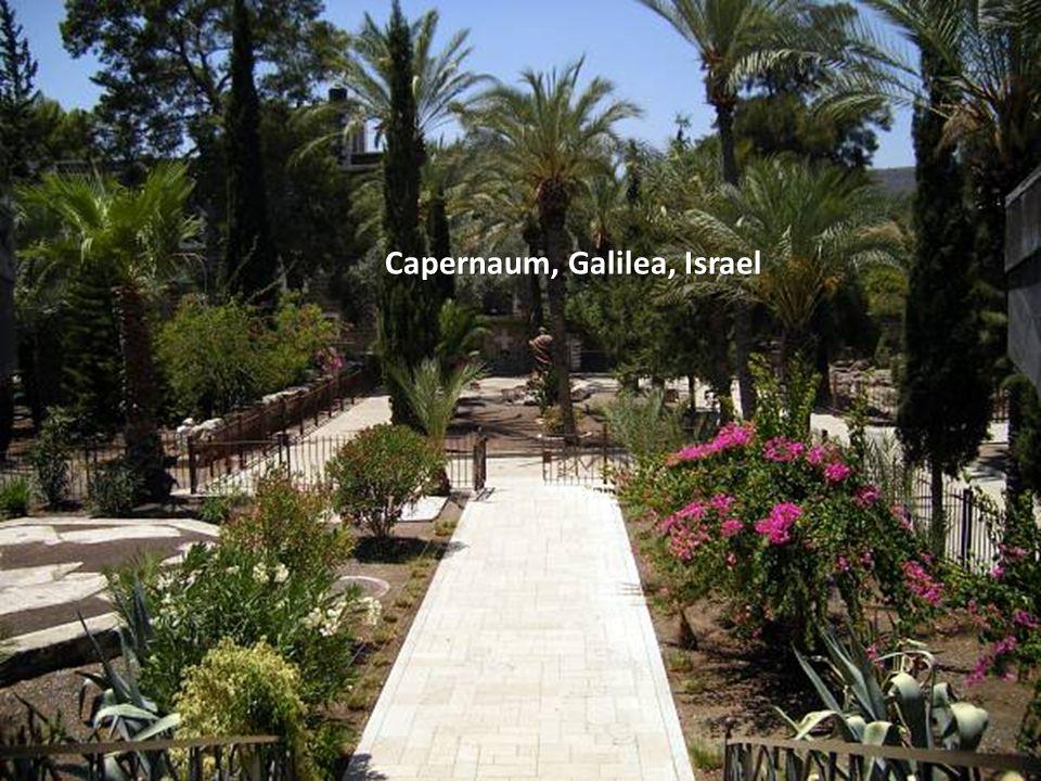 Sábado, 22 de Febrero de 201452 AHORA NOS ACERCAMOS A CAFARNAÚN, GALILEA, ISRAEL