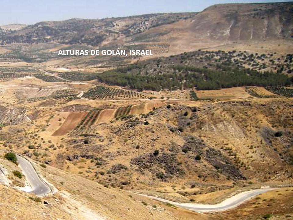 Sábado, 22 de Febrero de 201466 ALTURAS DE GOLÁN, ISRAEL.