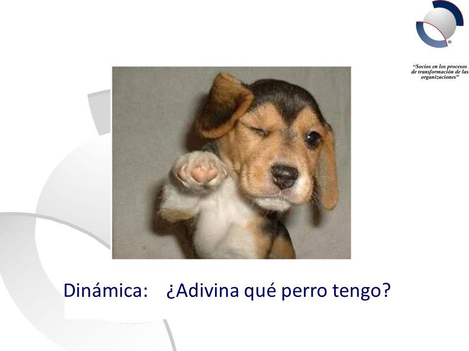 Dinámica: ¿Adivina qué perro tengo