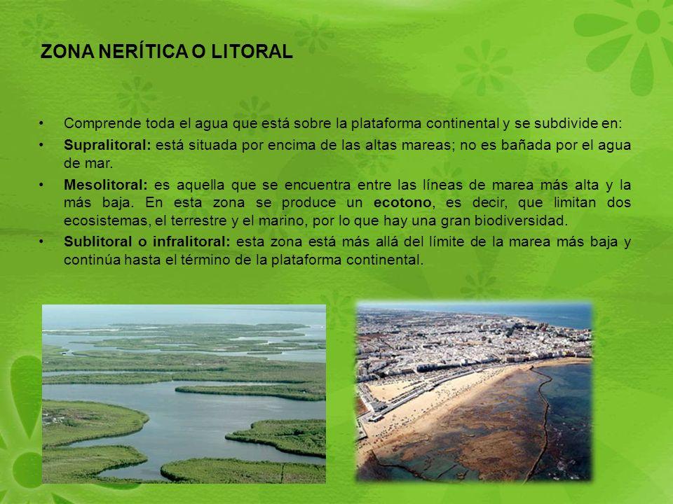 ZONA NERÍTICA O LITORAL Comprende toda el agua que está sobre la plataforma continental y se subdivide en: Supralitoral: está situada por encima de las altas mareas; no es bañada por el agua de mar.