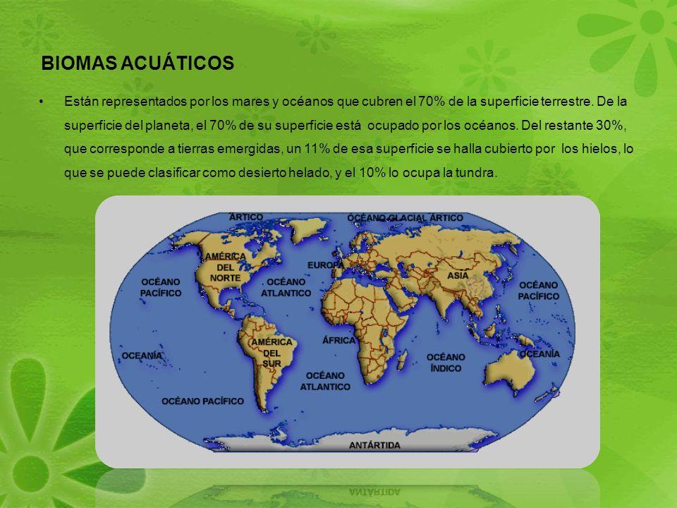 BIOMAS ACUÁTICOS Están representados por los mares y océanos que cubren el 70% de la superficie terrestre.