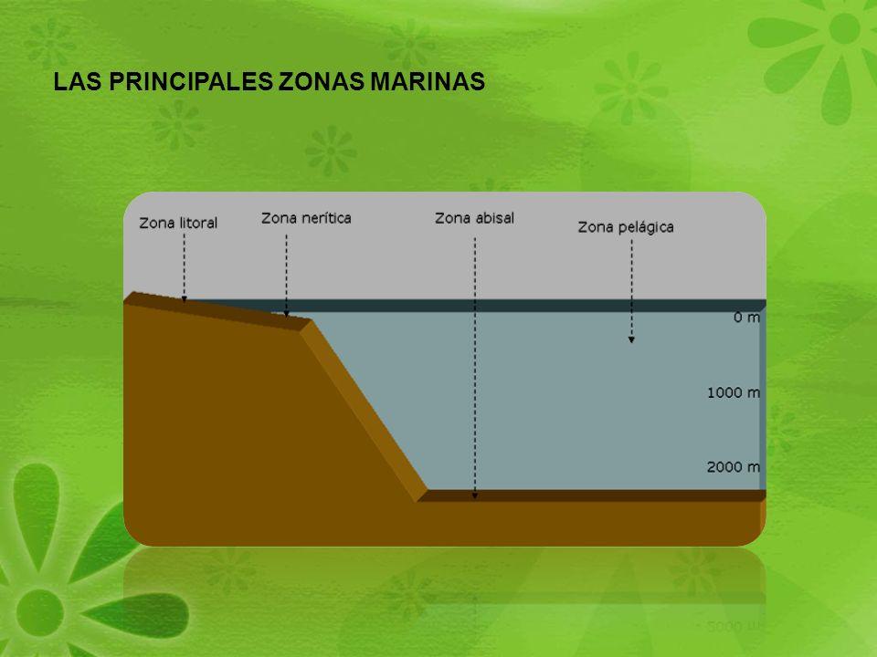ZONA PELÁGICA Zona de altamar, lejos de la plataforma continental, es el océano abierto La zona pelágica se caracteriza por tener una banda iluminada pero también grandes profundidades sin luz.
