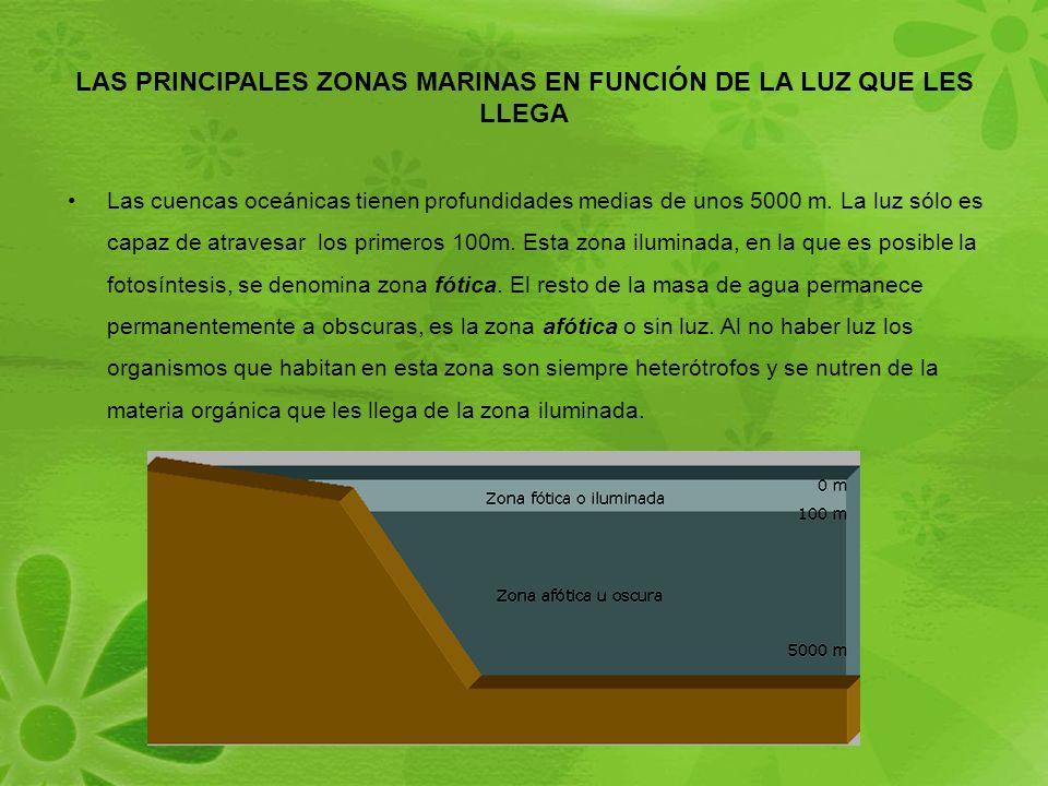 LAS PRINCIPALES ZONAS MARINAS EN FUNCIÓN DE LA LUZ QUE LES LLEGA Las cuencas oceánicas tienen profundidades medias de unos 5000 m.