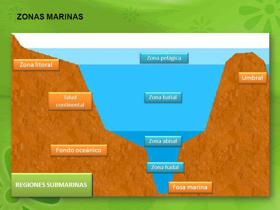ZONAS MARINAS Fosa marina Umbral Zona abisal Zona batial Zona pelágica Fondo oceánico Talud continental Talud continental Zona litoral REGIONES SUBMARINAS Zona hadal