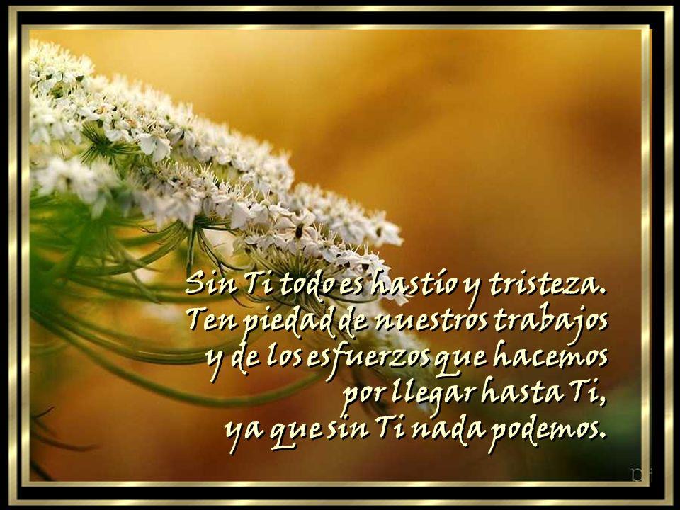 He sido creado para verte y todavía no he podido alcanzar el fin para el que fui creado. Y Tú, Señor, escúchanos. Ilumínanos. Muéstrate a nosotros. Ca