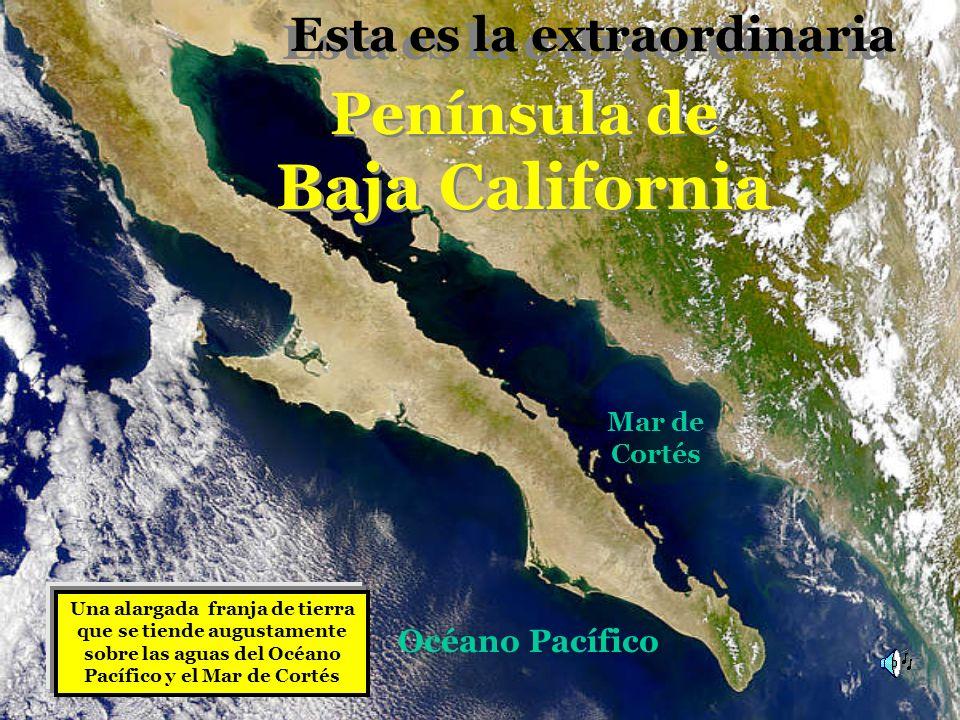 Una alargada franja de tierra que se tiende augustamente sobre las aguas del Océano Pacífico y el Mar de Cortés Península de Baja California Península de Baja California Esta es la extraordinaria Esta es la extraordinaria Océano Pacífico Mar de Cortés