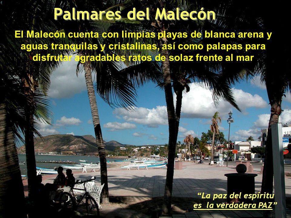 El Malecón cuenta con limpias playas de blanca arena y aguas tranquilas y cristalinas, así como palapas para disfrutar agradables ratos de solaz frente al mar La paz del espíritu es la verdadera PAZ Palmares del Malecón