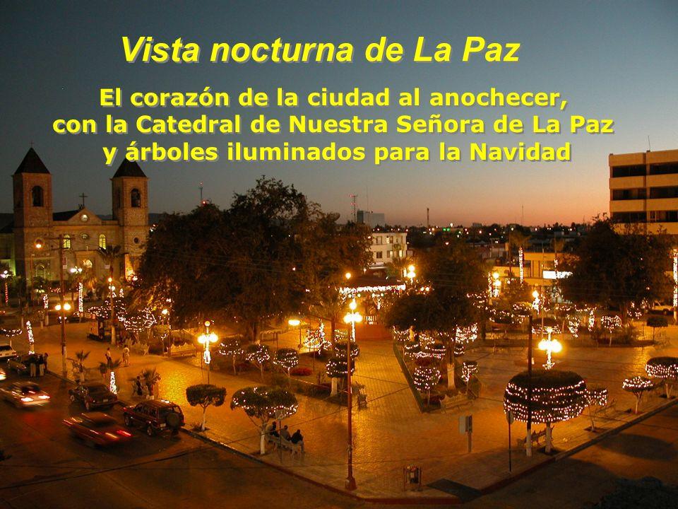 Vista nocturna de La Paz Vista nocturna de La Paz El corazón de la ciudad al anochecer, con la Catedral de Nuestra Señora de La Paz y árboles iluminados para la Navidad El corazón de la ciudad al anochecer, con la Catedral de Nuestra Señora de La Paz y árboles iluminados para la Navidad