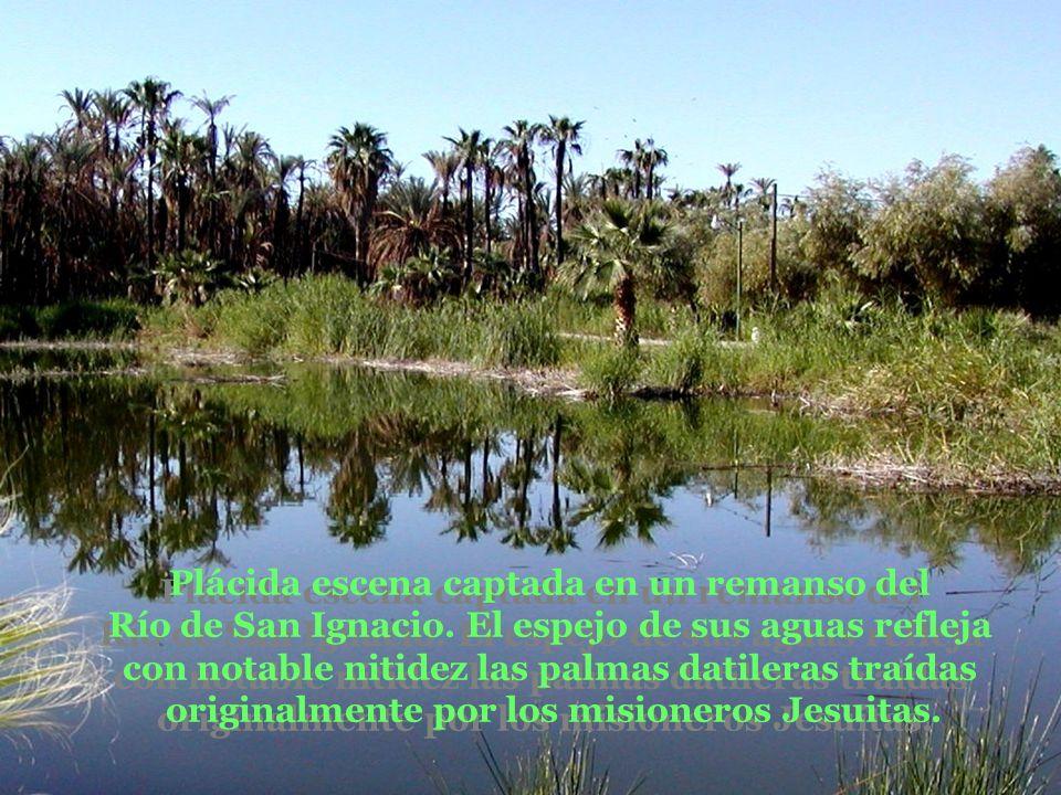 Plácida escena captada en un remanso del Río de San Ignacio.