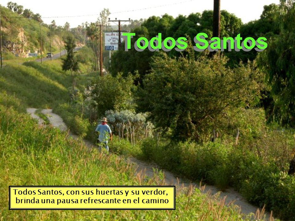 Todos Santos, con sus huertas y su verdor, brinda una pausa refrescante en el camino Todos Santos
