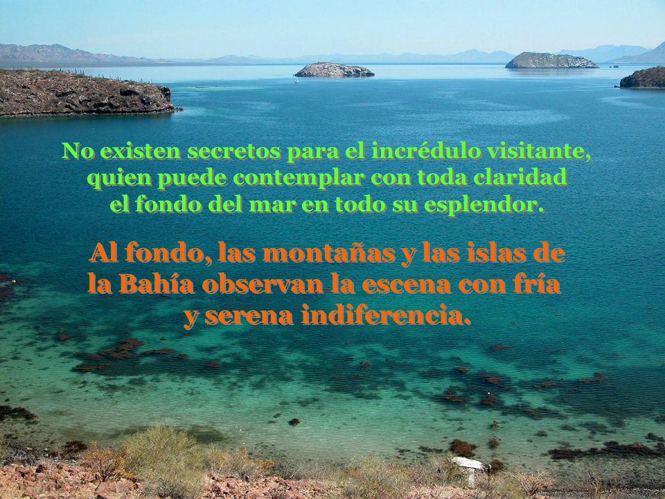 No existen secretos para el incrédulo visitante, quien puede contemplar con toda claridad el fondo del mar en todo su esplendor.