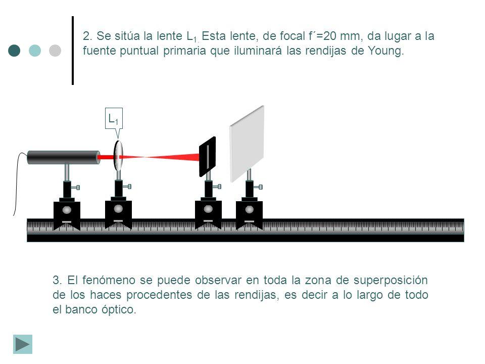L1L1 3. El fenómeno se puede observar en toda la zona de superposición de los haces procedentes de las rendijas, es decir a lo largo de todo el banco