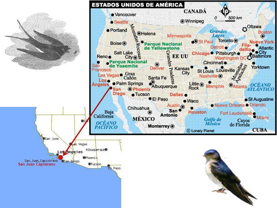 Las golondrinas de San Juan de Capistrano, indefectiblemente inician su viaje de migración hacia sud-América, el 23 de octubre, día de San Juan y reco