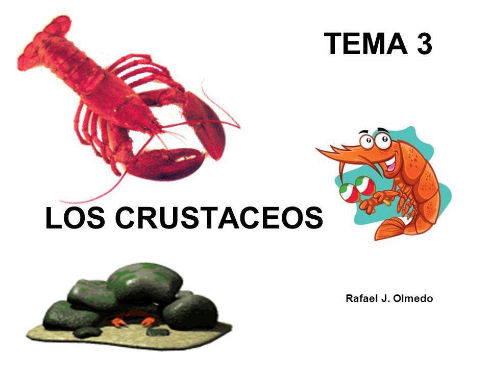 ÍNDICE 1.¿Qué son los crustáceos.2.¿Cuántas especies hay.