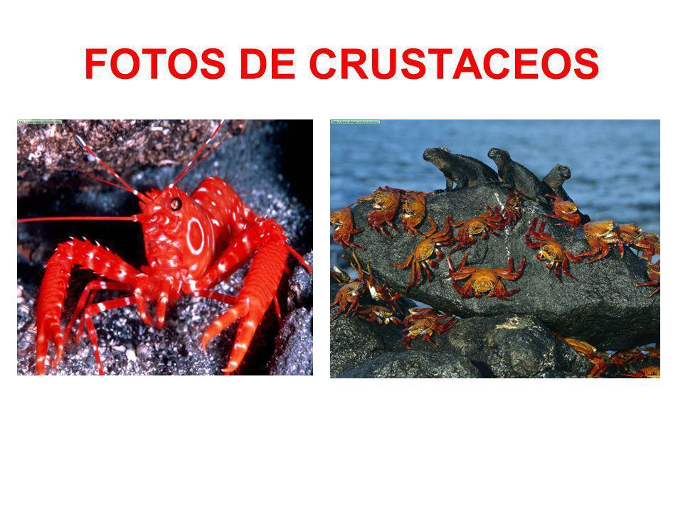 FOTOS DE CRUSTACEOS