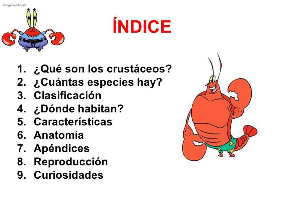 ÍNDICE 1.¿Qué son los crustáceos? 2.¿Cuántas especies hay? 3.Clasificación 4.¿Dónde habitan? 5.Características 6.Anatomía 7.Apéndices 8.Reproducción 9