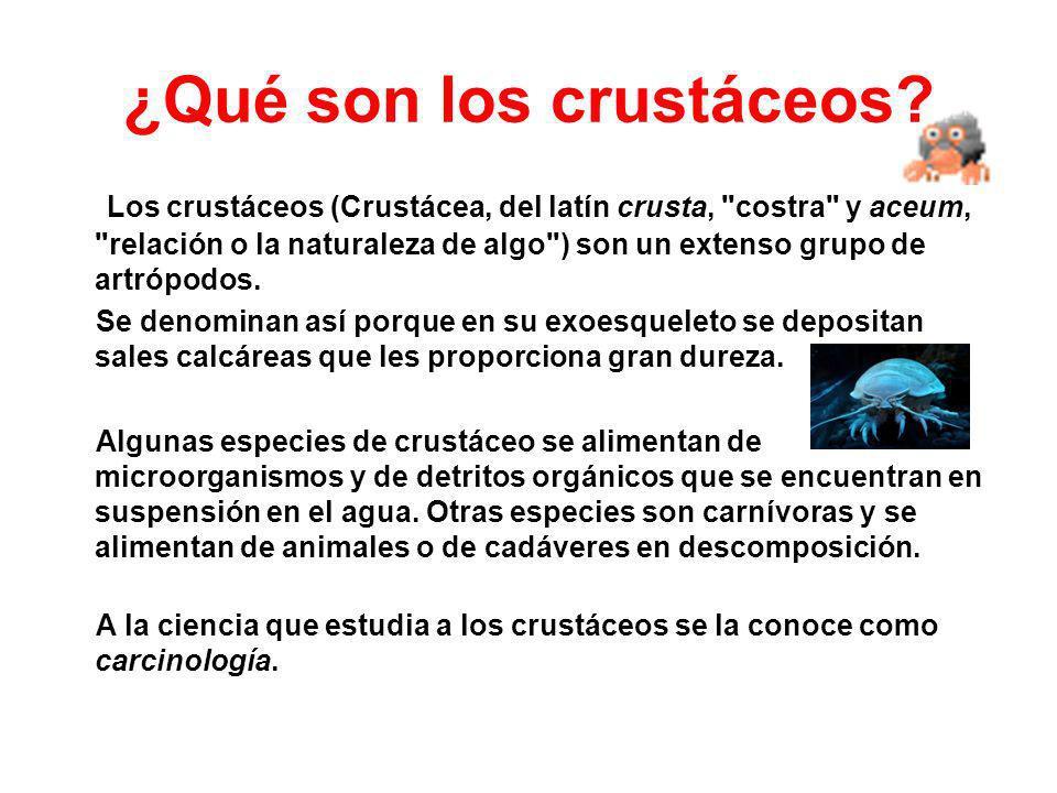 ¿Qué son los crustáceos? Los crustáceos (Crustácea, del latín crusta,