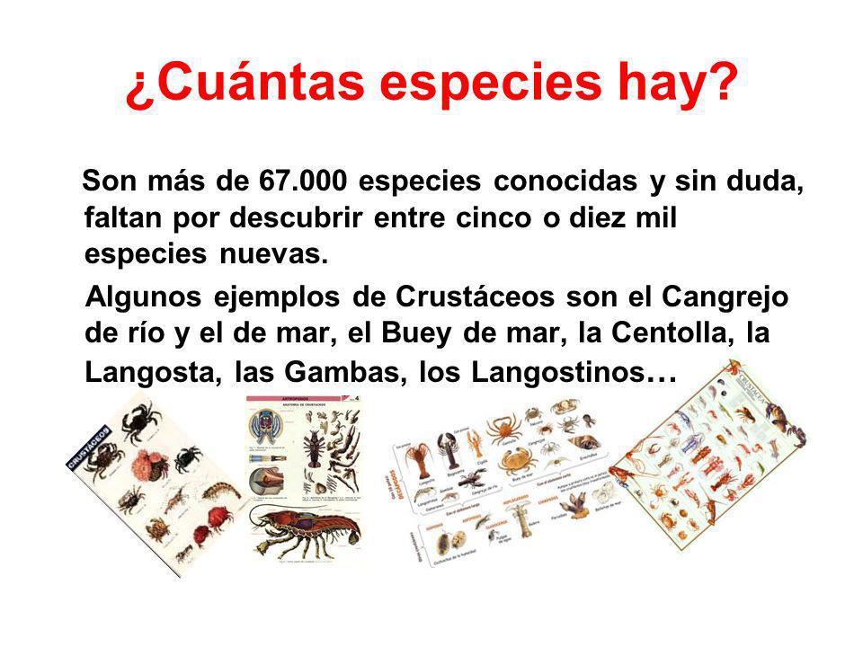 Clasificación La clasificación de los crustáceos ha sido tradicionalmente laberíntica.