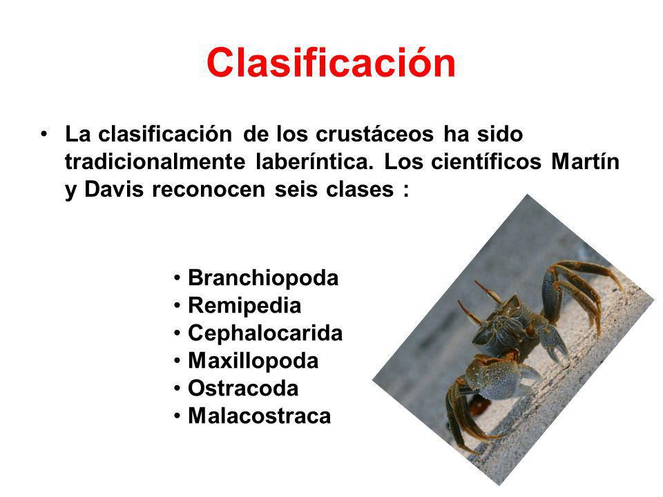 Clasificación La clasificación de los crustáceos ha sido tradicionalmente laberíntica. Los científicos Martín y Davis reconocen seis clases : Branchio
