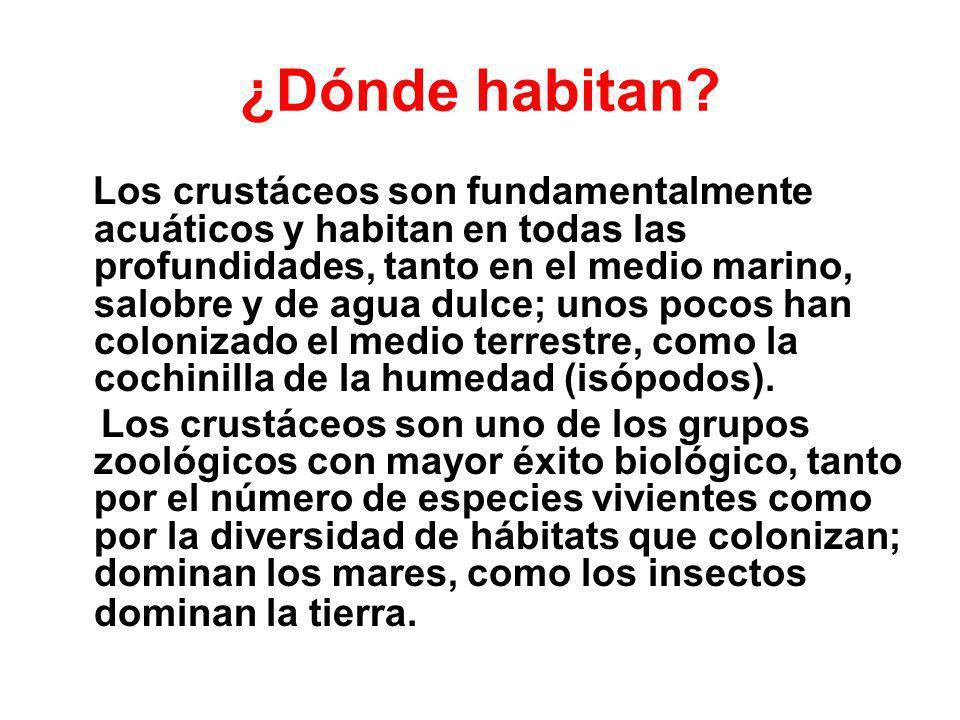 ¿Dónde habitan? Los crustáceos son fundamentalmente acuáticos y habitan en todas las profundidades, tanto en el medio marino, salobre y de agua dulce;