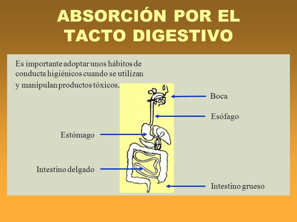 ABSORCIÓN POR EL TACTO DIGESTIVO Es importante adoptar unos hábitos de conducta higiénicos cuando se utilizan y manipulan productos tóxicos. Boca Esóf