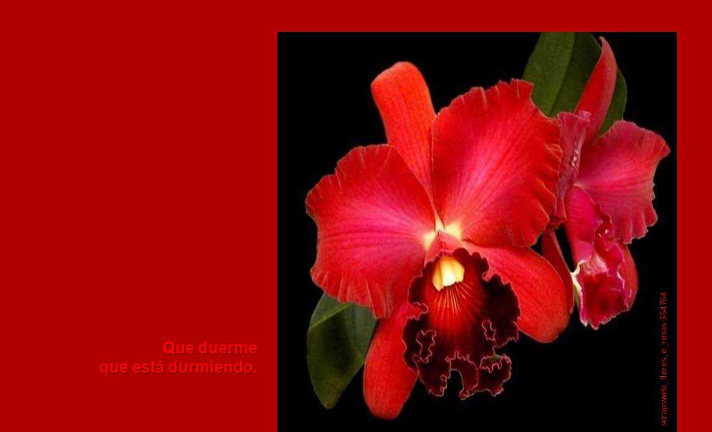 que mata a flor su tristeza, que vive Julio Romero. blogs.elcorreodigital.com