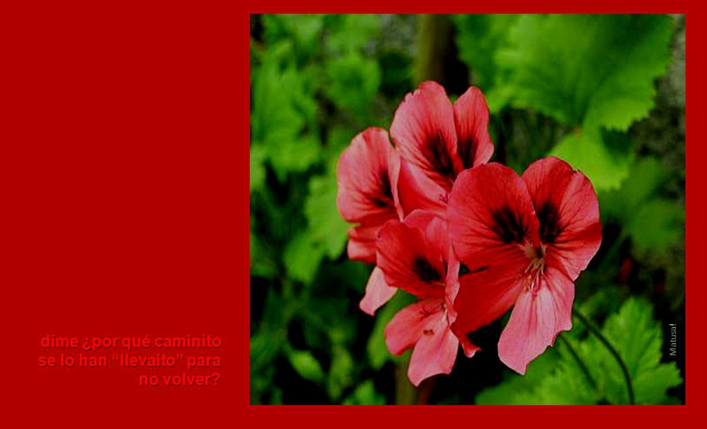 www.florflores.com/geranio Dime, dime puentecito, Puente de San Rafael, Puente de San Rafael,