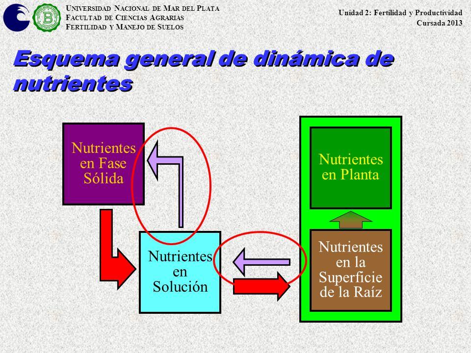 U NIVERSIDAD N ACIONAL DE M AR DEL P LATA F ACULTAD DE C IENCIAS A GRARIAS F ERTILIDAD Y M ANEJO DE S UELOS Esquema general de dinámica de nutrientes
