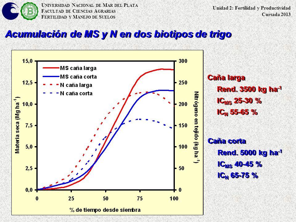 U NIVERSIDAD N ACIONAL DE M AR DEL P LATA F ACULTAD DE C IENCIAS A GRARIAS F ERTILIDAD Y M ANEJO DE S UELOS Acumulación de MS y N en dos biotipos de t