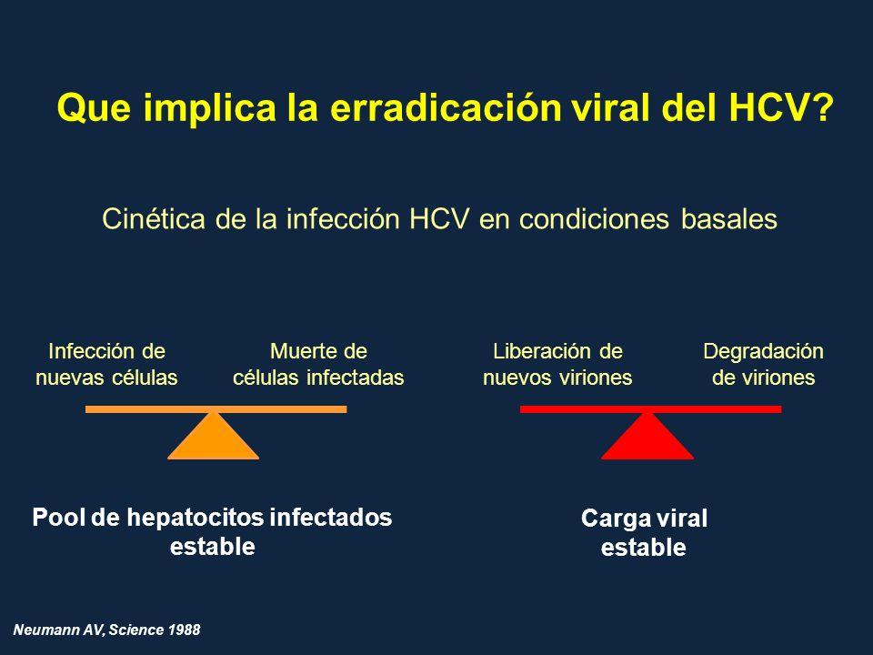 Que implica la erradicación viral del HCV? Cinética de la infección HCV en condiciones basales Infección de nuevas células Muerte de células infectada