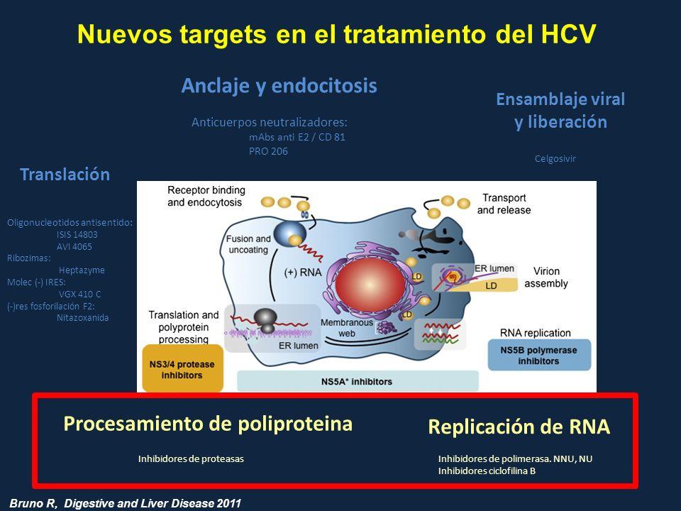 Anticuerpos neutralizadores: mAbs anti E2 / CD 81 PRO 206 Oligonucleotidos antisentido: ISIS 14803 AVI 4065 Ribozimas: Heptazyme Molec (-) IRES: VGX 4