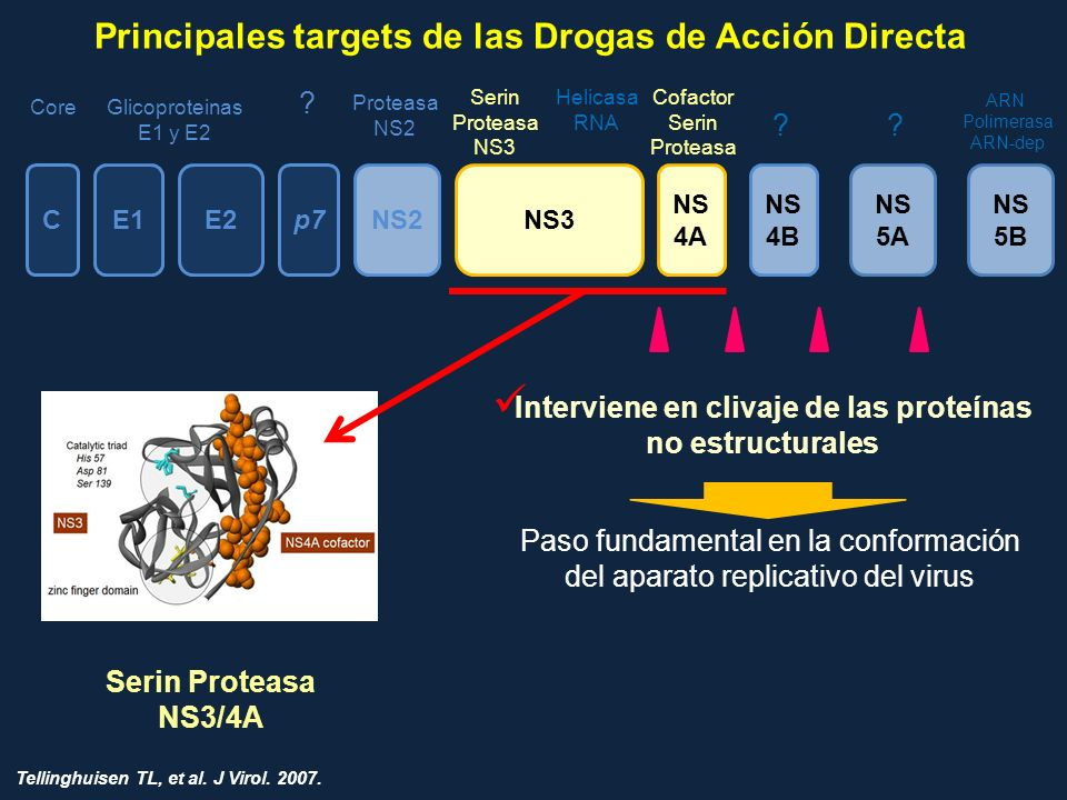 CE1E2p7NS2 NS 4A NS 4B NS 5A NS 5B CoreGlicoproteinas E1 y E2 Proteasa NS2 Serin Proteasa NS3 Cofactor Serin Proteasa ?? ? ARN Polimerasa ARN-dep NS3