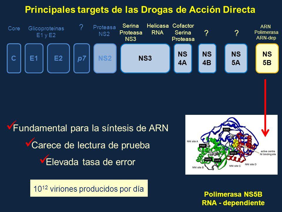 Fundamental para la síntesis de ARN Carece de lectura de prueba Elevada tasa de error CE1E2p7NS2 NS 4A NS 4B NS 5A NS 5B CoreGlicoproteinas E1 y E2 Pr