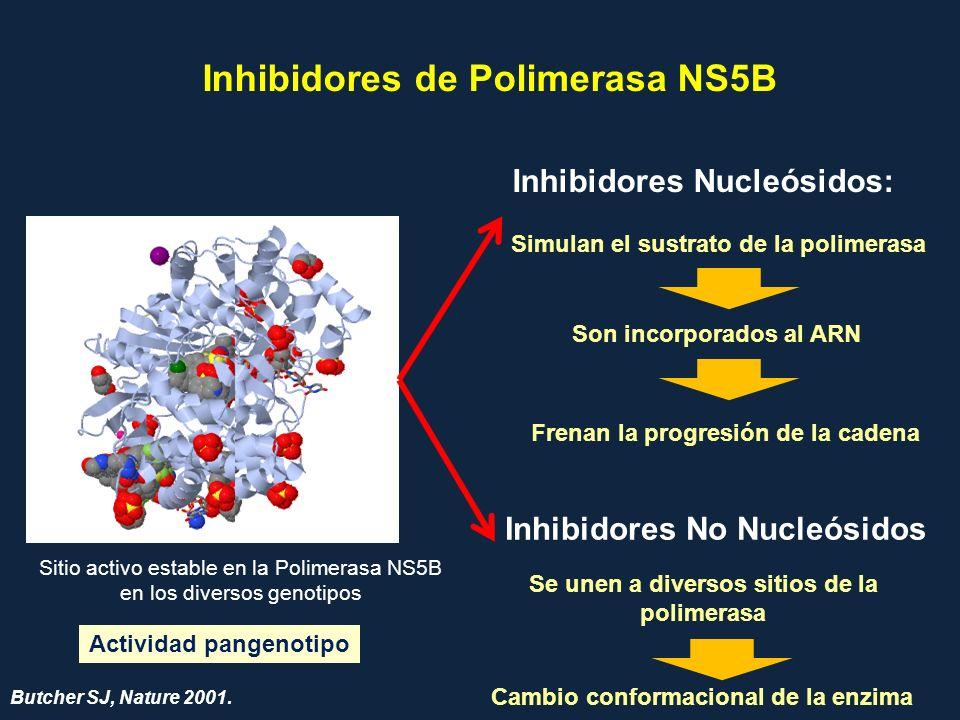 Inhibidores de Polimerasa NS5B Inhibidores Nucleósidos: Inhibidores No Nucleósidos Simulan el sustrato de la polimerasa Son incorporados al ARN Frenan