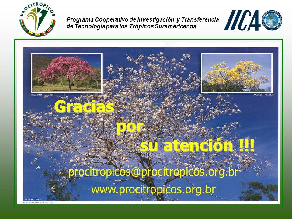 Programa Cooperativo de Investigación y Transferencia de Tecnología para los Trópicos Suramericanos Gracias por por su atención !!.