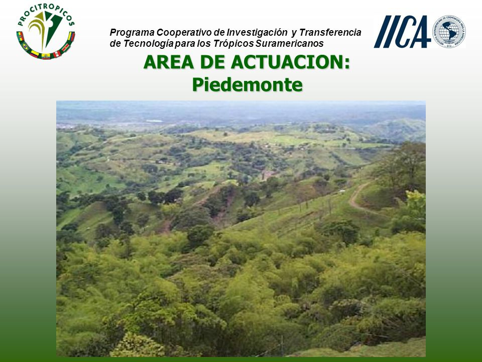 AREA DE ACTUACION: Piedemonte Programa Cooperativo de Investigación y Transferencia de Tecnología para los Trópicos Suramericanos