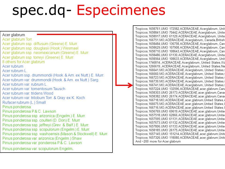 spec.dq- Especimenes Spec.dq Acer glabrum Acer glabrum Torr.