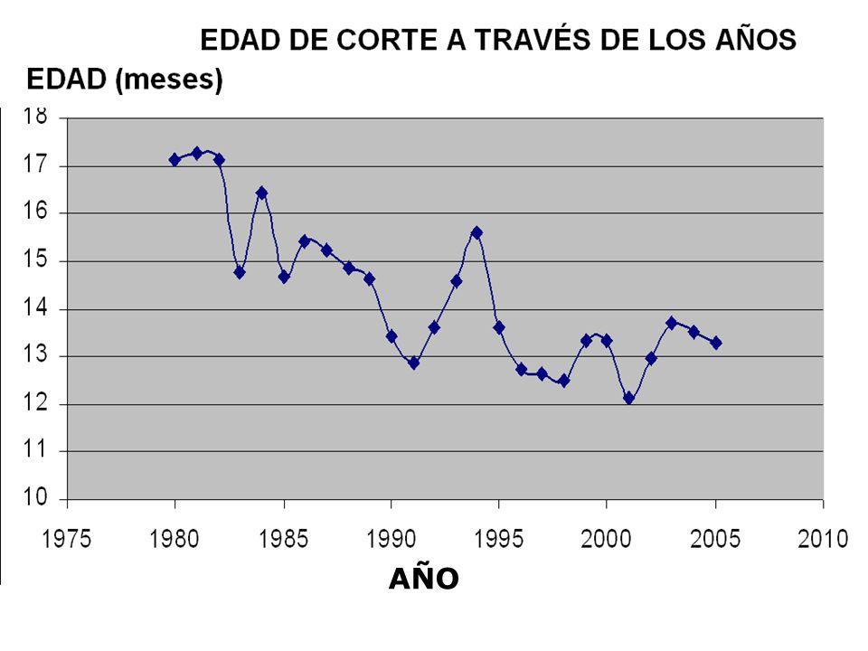 Centro de Investigación de la Caña de Azúcar de Colombia AÑO