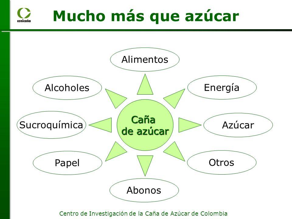 Centro de Investigación de la Caña de Azúcar de Colombia Mucho más que azúcar Sucroquímica Caña de azúcar Alcoholes Abonos Papel Alimentos Energía Otros Azúcar