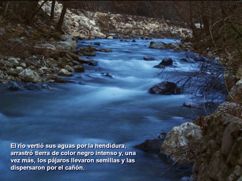 El río vertió sus aguas por la hendidura, arrastró tierra de color negro intenso y, una vez más, los pájaros llevaron semillas y las dispersaron por el cañón.