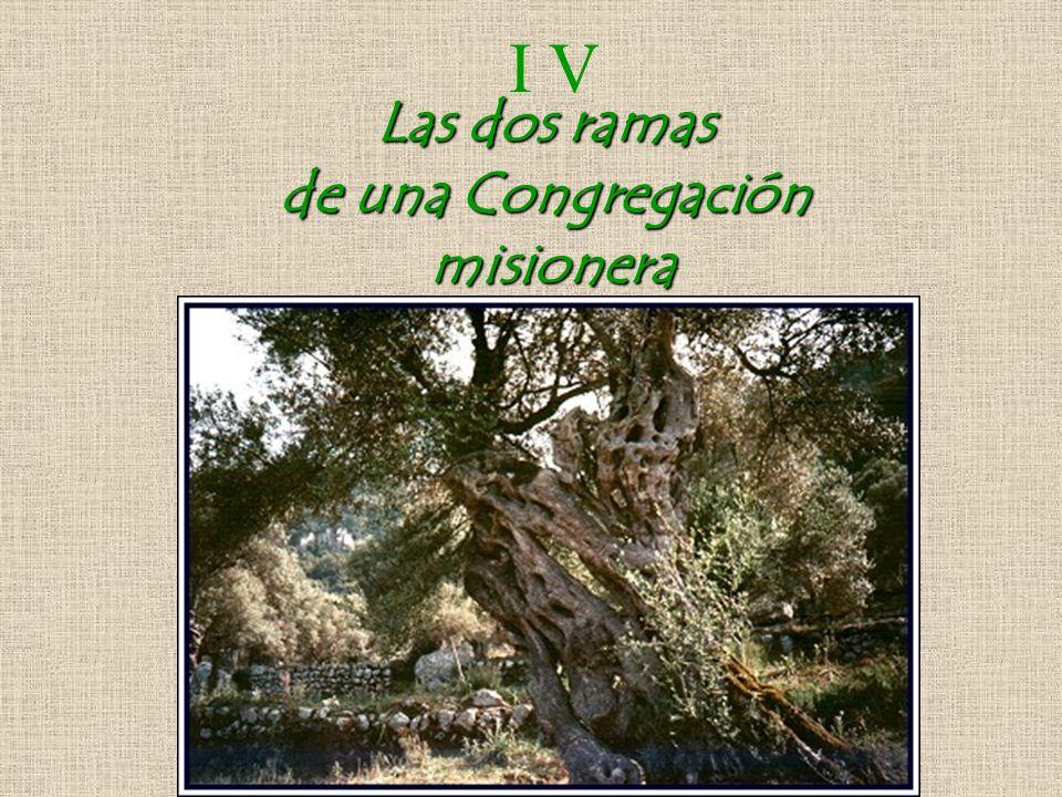 Las dos ramas de una Congregación misionera I V