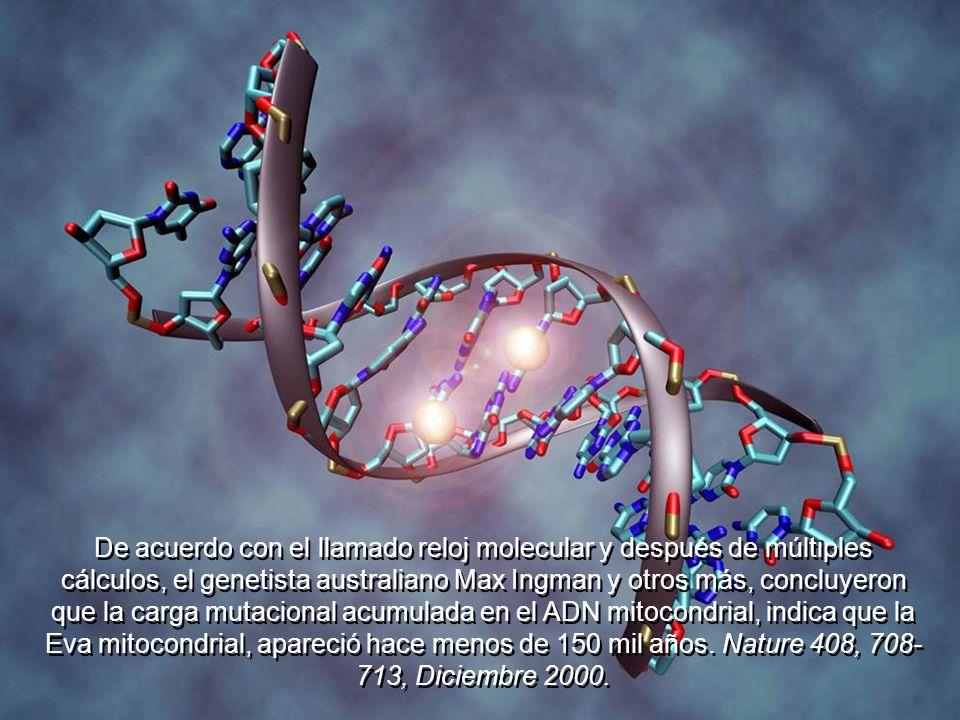 De acuerdo con el llamado reloj molecular y después de múltiples cálculos, el genetista australiano Max Ingman y otros más, concluyeron que la carga mutacional acumulada en el ADN mitocondrial, indica que la Eva mitocondrial, apareció hace menos de 150 mil años.