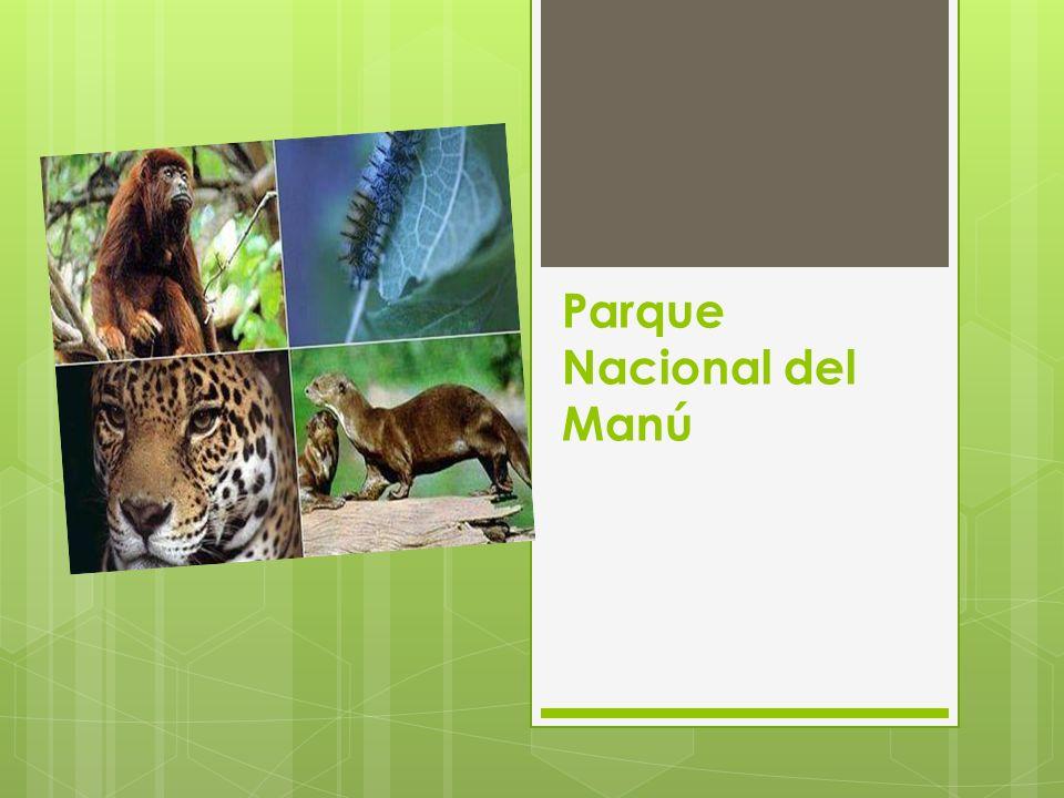 La Reserva de Biósfera del Manu se encuentra al sureste del Perú, ubicado parcialmente en las regiones de Madre de Dios y Cusco, en las provincias de Manu y Paucartambo.