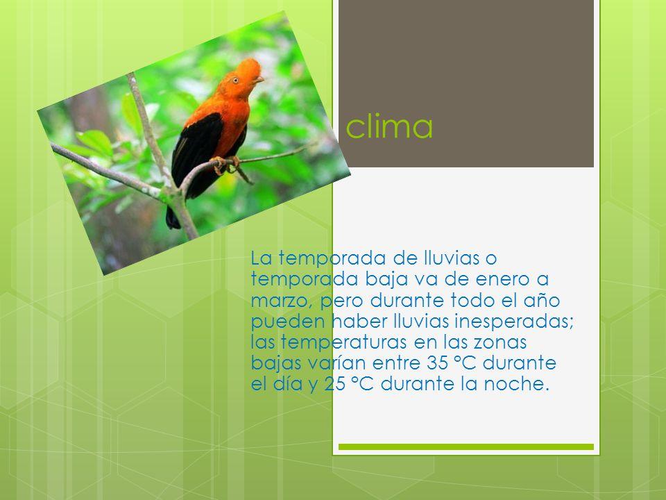 Flora y fauna En el Manu es posible encontrar toda la variedad de pisos ecológicos que existen en la Amazonía y esto la hace una de las áreas protegidas más apreciadas.