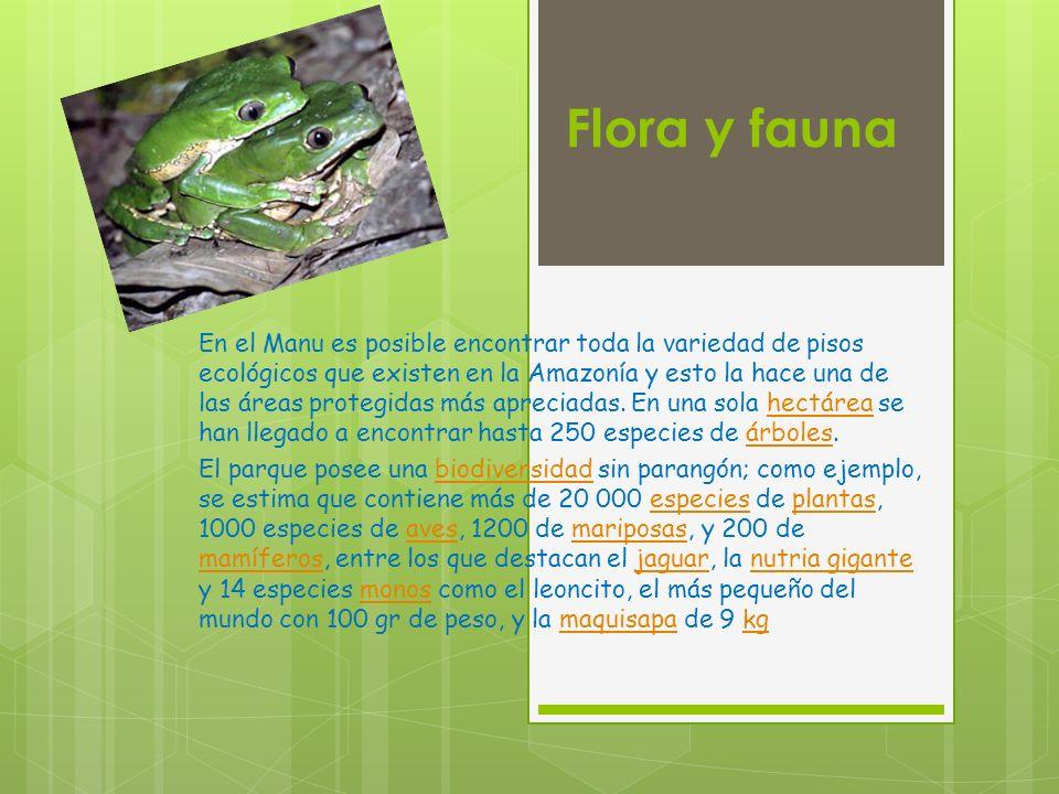 MamíferosMamíferos: 159 especies ReptilesReptiles: 99 especies AnfibiosAnfibios: 140 especies AvesAves: 800 especies PecesPeces: 210 especies Insectos MariposasMariposas: 1 307 especies HormigasHormigas: 300 especies AnisópterosAnisópteros: 136 especies AbejasAbejas: 650 especies Esto hace que el Parque Nacional del Manu sea el área protegida con mayor diversidad biológica en el mundo.