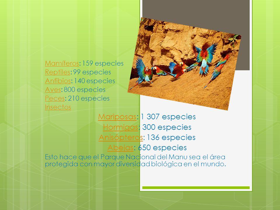 MamíferosMamíferos: 159 especies ReptilesReptiles: 99 especies AnfibiosAnfibios: 140 especies AvesAves: 800 especies PecesPeces: 210 especies Insectos